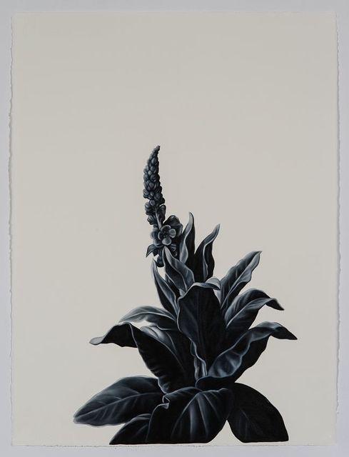 , 'Broadleaf (after Desportes),' 2016, Sears-Peyton Gallery