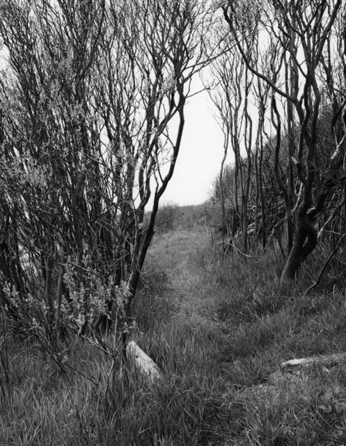 , 'Circuit Path, South, Appledore Island,' 2015, Pucker Gallery