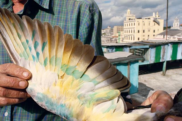 , 'Havana, Cuba (from the series Violet Isle),' 2008, Robert Klein Gallery