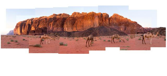 Marcos Chaves, 'Wadi Rum Camels', 2014, Galeria Nara Roesler