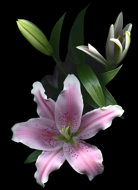 , 'Oriental Lily,' 2016, Light Space & Time
