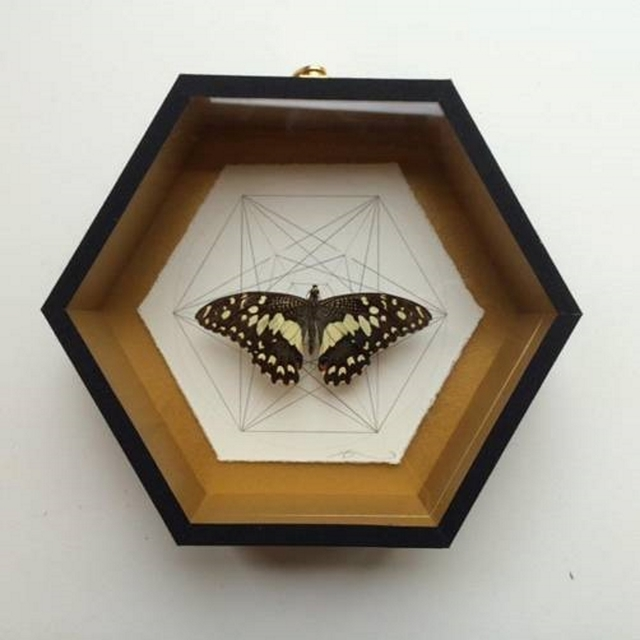 , 'Geometry of the Butterfly – Speckled Brown,' 2015, Lawrence Alkin Gallery