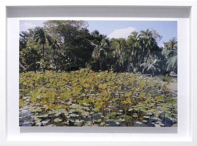 , 'Linetrap 14,' 2015, Carlos Carvalho- Arte Contemporanea