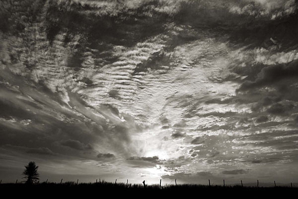 Cara Weston, 'Mexico Border, Sunset', 2006, Weston Gallery