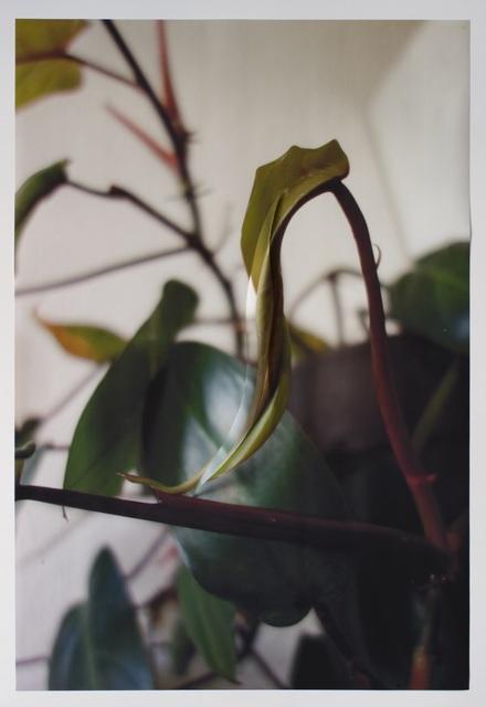 Sinta Werner, 'Spaltungsirresein XVIII', 2018, Photography, Cut and folded archival pigment print, alexander levy