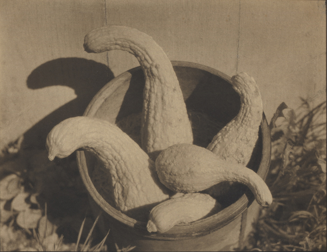 , 'Untitled (Gourds),' 1922, Robert Mann Gallery