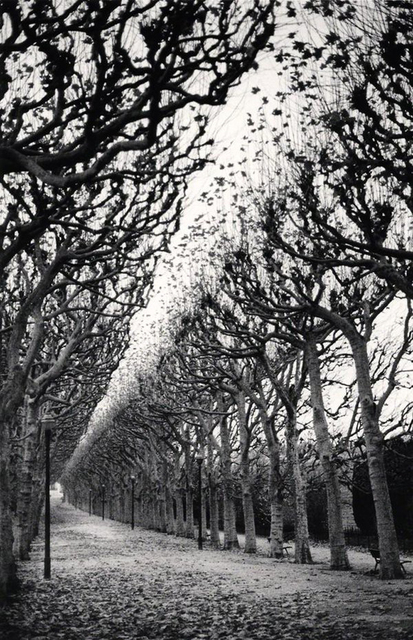 Michael Kenna, 'Jardin des Plantes, Study 1, Paris, France', 1988, Photography, Sepia toned gelatin silver, PDNB Gallery