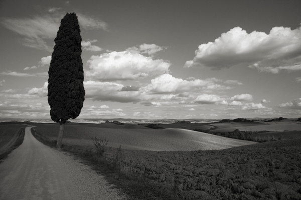 , 'Lone Tree, Italy,' , Weston Gallery