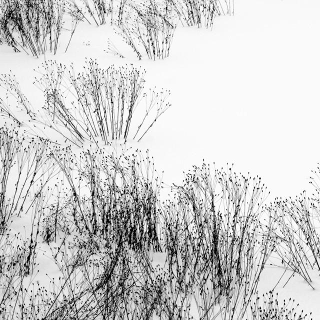 , 'Untitled,' 2016, Kamiya Art