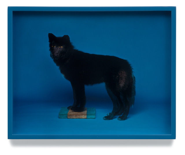 , 'Wolf (Blue),' 2008, Vancouver Art Gallery