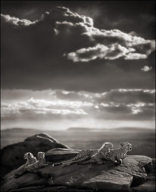 , 'Cheetah & Cubs Lying on Rock, Serengeti,' 2007, Edwynn Houk Gallery