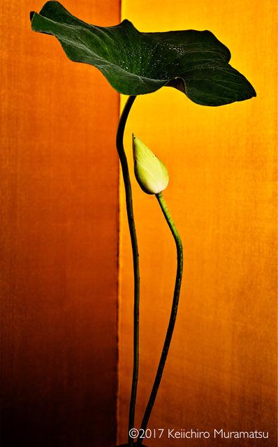 Keiichirô Muramatsu, 'golden light 22', 2017, Galerie Marie-Robin
