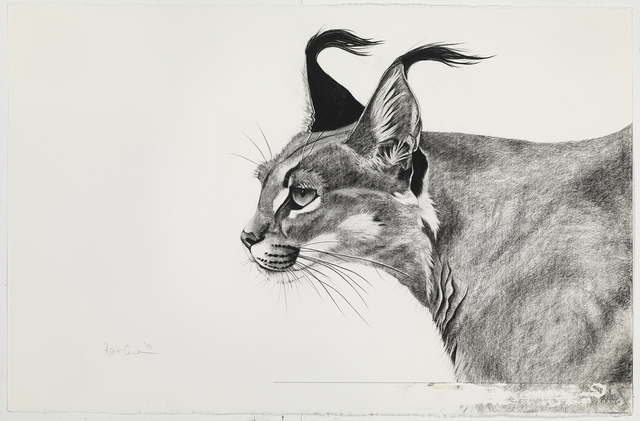 , 'Caracal in the Wind,' , Sladmore Contemporary