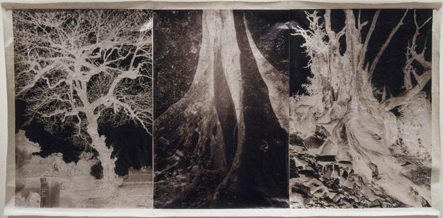 , 'Brocade,' 2000, David Richard Gallery