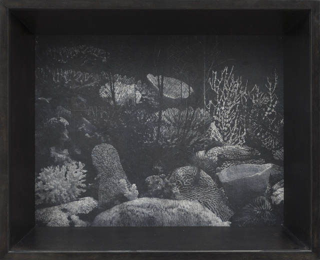 Patrick Van Caeckenbergh, 'Corals of Australia and the Indo-Pacific (spring 2013)', 2013, Zeno X Gallery