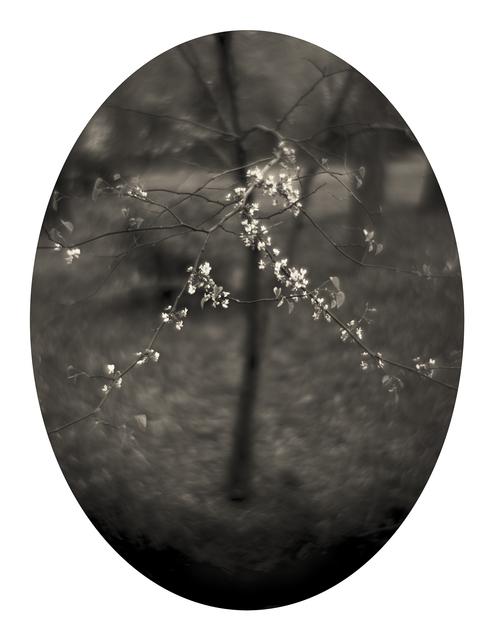 , 'Spring,' 2005, SOCO GALLERY