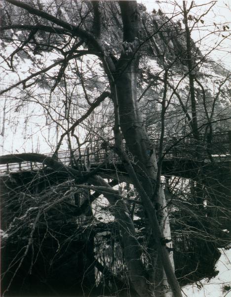 , 'East Rock, New Haven,' 1994, Barbara Gross