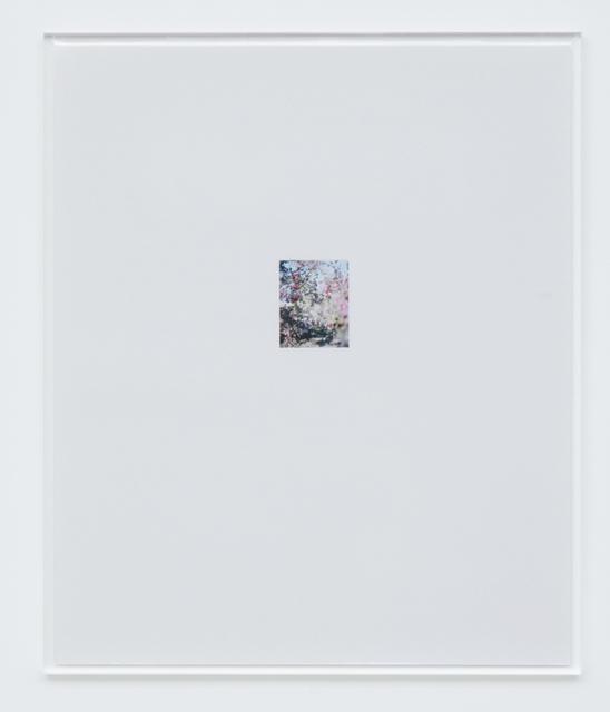 , 'Apple Tree 6,' 2017, Tomio Koyama Gallery
