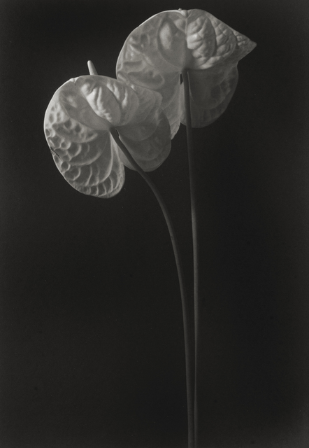 , 'Still Life #581,' 1997, Photography West Gallery