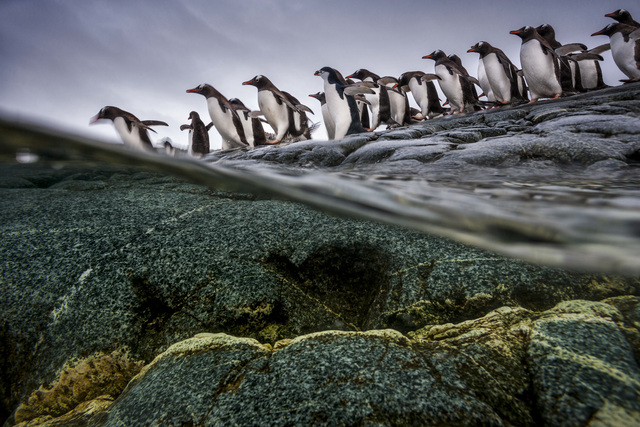 , 'The Over/Under,' , Paul Nicklen Gallery