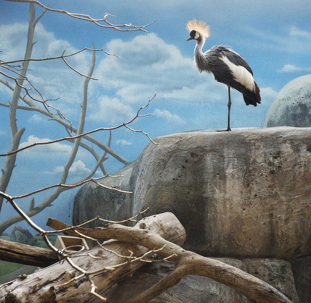 , 'Black Crowned Crane and Boulder,' 2015, Galerie Dumonteil