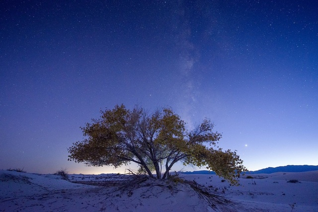 , 'Cottonwood Tree and Milky Way, Blue Hour, Autumn, White Sands National Monument, New Mexico,' ca. 2016, Afterimage Gallery