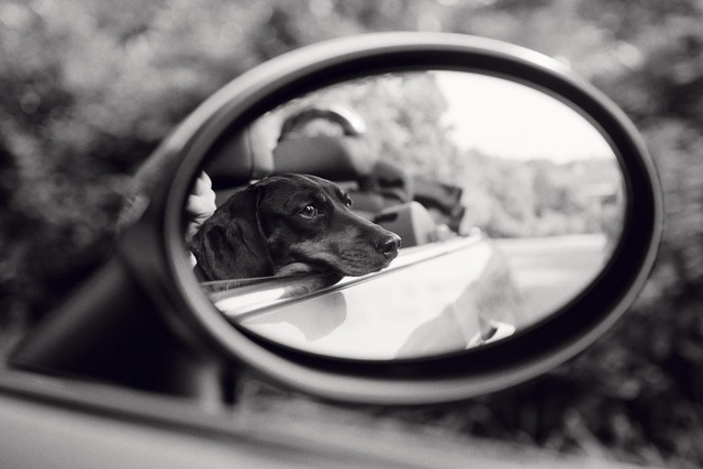 , 'Lola, Rear View Mirror, East Hampton,' 2007, Staley-Wise Gallery