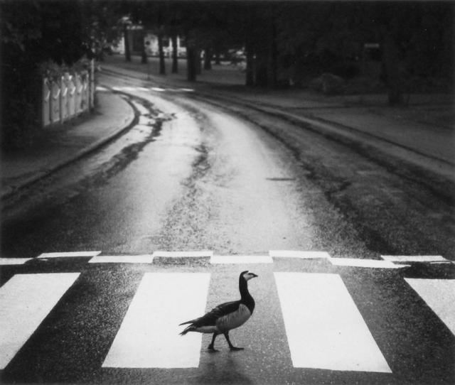 , 'Hanko, Finland,' 2014, photo-eye Gallery
