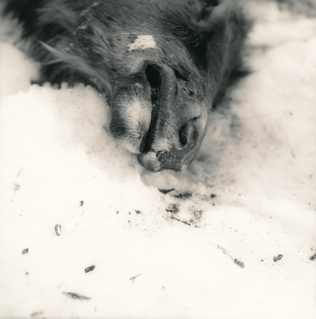 Ken Rosenthal, 'Frozen', 2010, Photography, Split-Toned Gelatin Silver Print, photo-eye Gallery