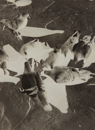 László Moholy-Nagy, 'Untitled (pigeons),' ca. 1925-1930, Phillips: The Odyssey of Collecting