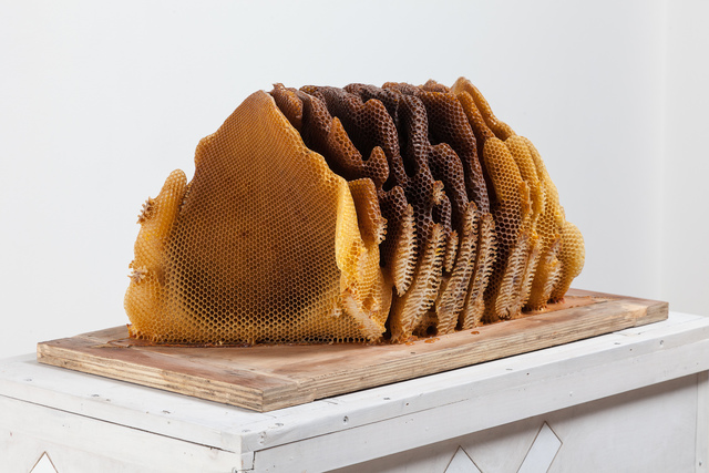 , 'Programmed Hive 11,' 2014, Locks Gallery