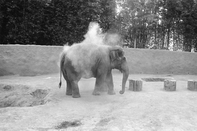 Mark Steinmetz, 'Los Angeles Zoo', 1983, Yancey Richardson Gallery