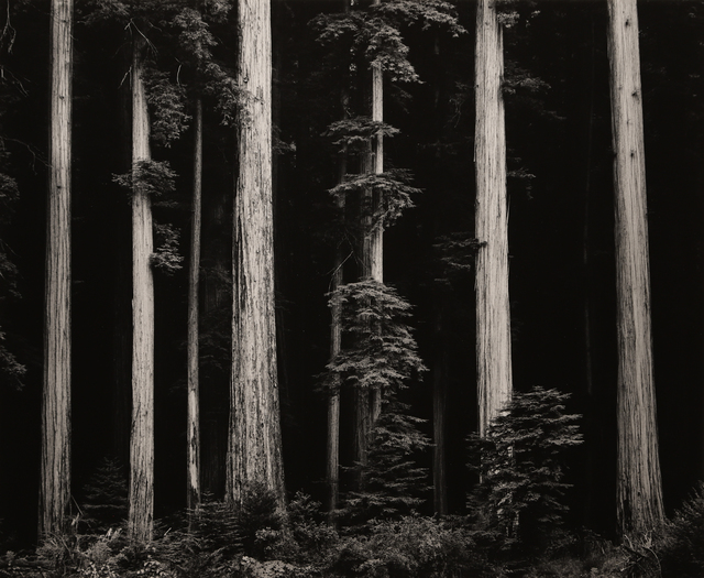 , 'Northern California Coast Redwoods,' 1960, Seagrave Gallery