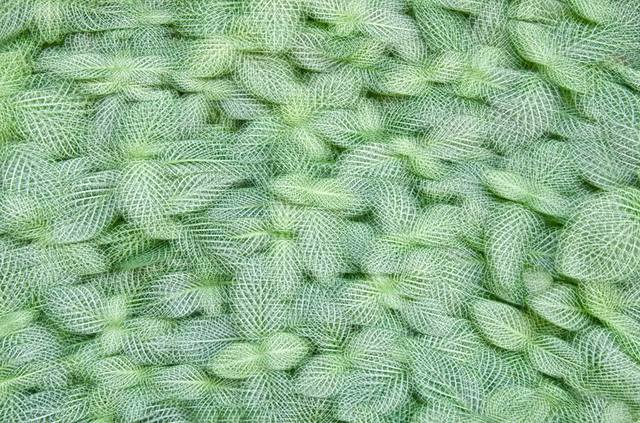 , 'Artificial view_botanical_2,' 2015, KANA KAWANISHI GALLERY