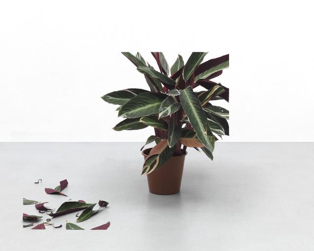 , 'Plant 2,' 2018, Federico Luger (FL GALLERY)