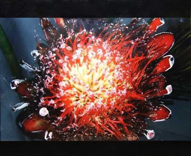 Nobuyoshi Araki, 'Flower', 1990, Burning in Water