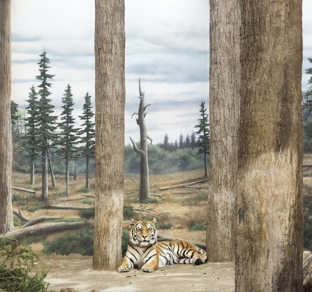 , 'Tiger and Forest,' 2015, Galerie Dumonteil