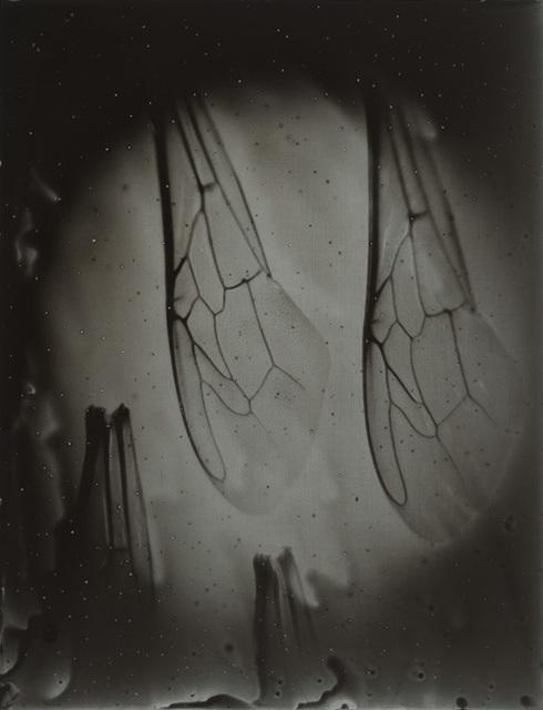 Anne Noble, 'Bee Wing Morphology #7', 2015, Bartley + Company Art