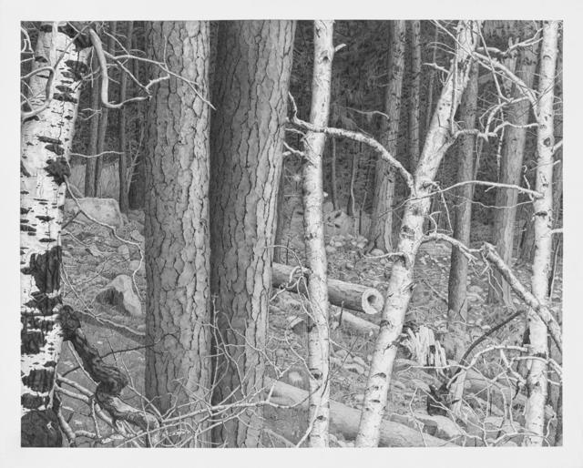 , 'Forest,' 2016, Miller Yezerski Gallery