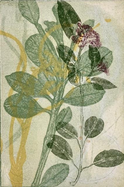 Trudy Rice, 'The bush II', 2019, Print, Solarplate Etching & Monotype, MELBOURNE STUDIOS #trudyrice & #lisasewards