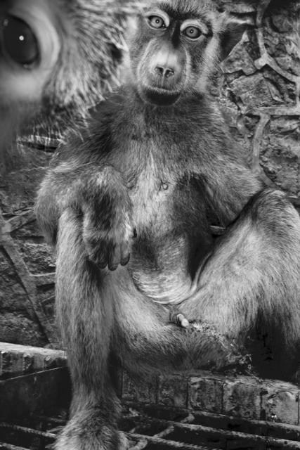 , 'Peeing Monkey,' 2011, °CLAIR Galerie