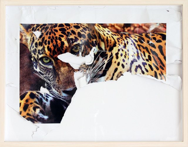 , 'Amazing planet, animals bitten by a dog (Jaguar),' 2014, Machete
