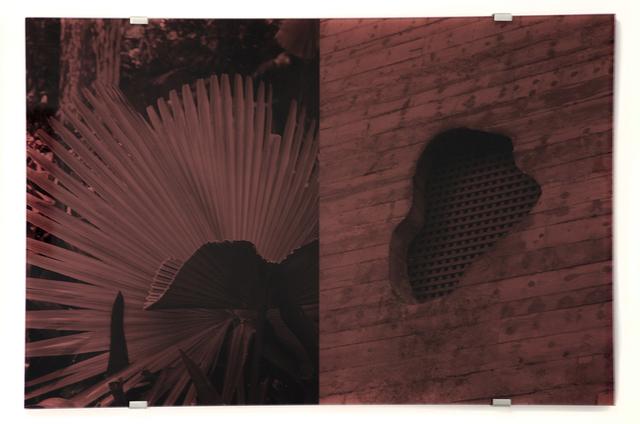 , 'Sesc Pompeia, Trachycarpus Fortunei,' 2016, Christopher Grimes Gallery