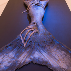 , 'Mermaid Tail, Mermaid Wig,Mermaid Contacts,Mermaid Lipstick,' 2012, Nina Johnson