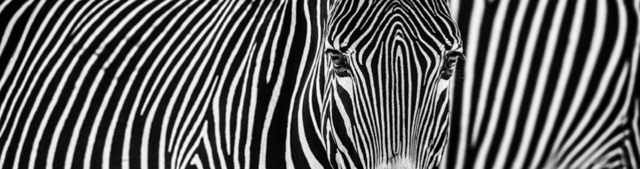 David Yarrow, 'Parallel Lines', 2018, Photography, Archival Pigment Print, Hilton Asmus