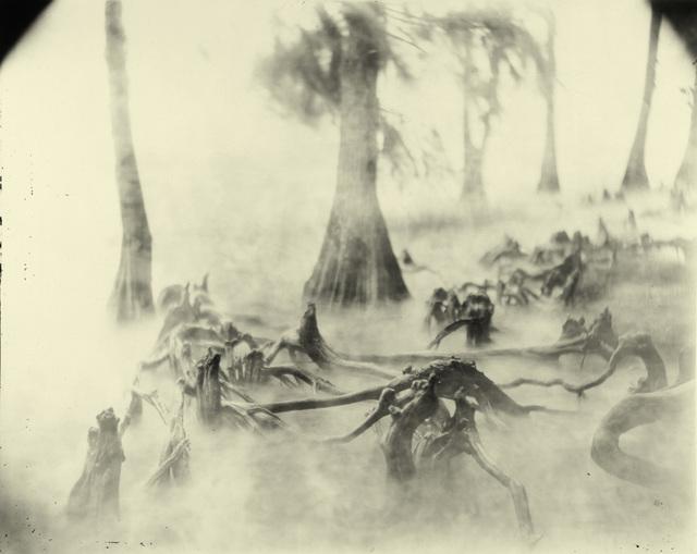 , 'Deep South, Untitled (Swamp Bones),' 1998, Edwynn Houk Gallery