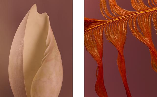 , 'Feather, Shell.,' 2018, Gallery Elena Shchukina