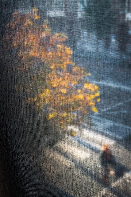 , 'When The Last Tree ,' 2018-2019, Artist's Proof