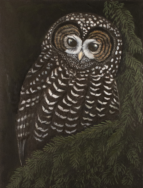 Tony Angell, 'Ancient Forest Spotted Owl', 2021, Drawing, Collage or other Work on Paper, Lithograph with hand painting, Foster/White Gallery