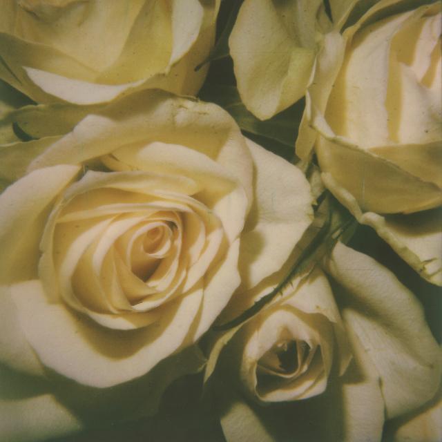 Kirsten Thys van den Audenaerde, 'Kiss from a Rose', 2019, Instantdreams